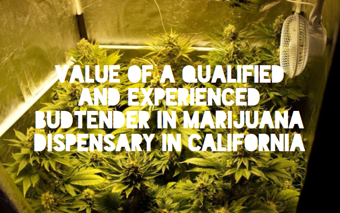 Value of a Qualified and Experienced Budtender in Marijuana Dispensary in California
